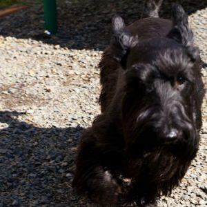 Black dog enjoying our pet-friendly community